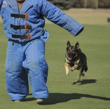 training security dog
